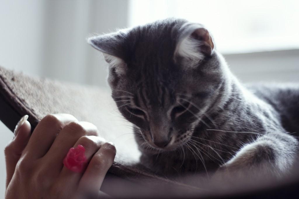 Grey Cat hand ring